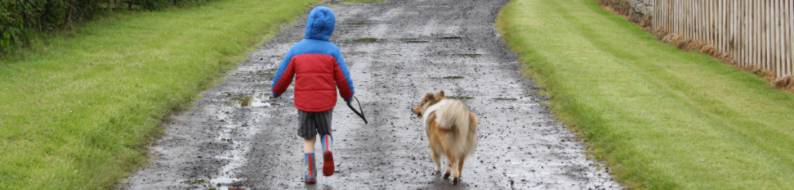 Photo of my son taking the grandparents Sheltie for a walk